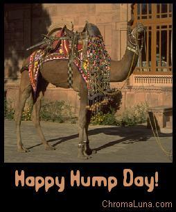 happy humpday